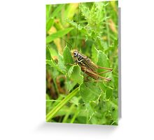 Roesel's Bush Cricket Greeting Card