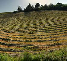 hdr wards creek panorama hayfield by Jamie Roach