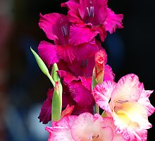 Glorious gladiolas! by Ruth Lambert