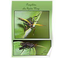 Spider Wasp Poster