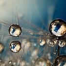 Royal Sea Blue Drops by Sharon Johnstone