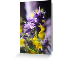 Violet and Yellow (from wild flowers collection) Greeting Card