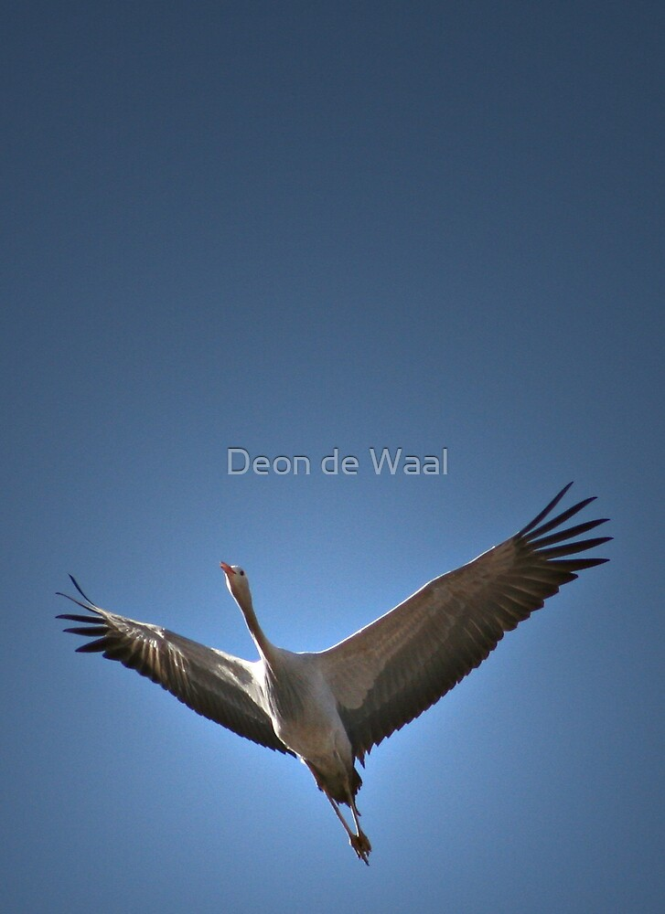 Bluebird by Deon de Waal