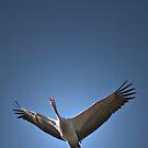Bluebird by Deon de Waal