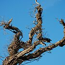 Blue Sky Tree by Paul Morley