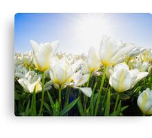 Tulips from Holland Canvas Print