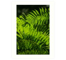 Backyard Fern Art Print