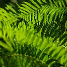 Backyard Fern by Jason Smith