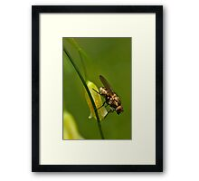 Asparagus flower and insect Framed Print