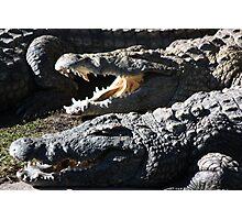 Reptile Smile Photographic Print