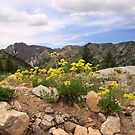 Mountain View by Gene Praag