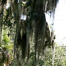 Spanish Moss by Fern Design