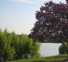 Woodlawn Lake & Park, San Antonio, Tx (City Park) by StellaMorales