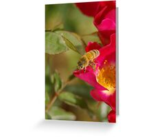 Bee in the rose Greeting Card