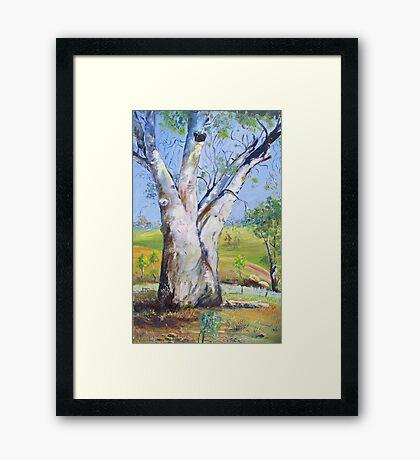 Gum Tree Hancocks Lookout Framed Print