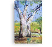 Gum Tree Hancocks Lookout Canvas Print