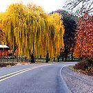 Yellow Tree by Aaron  Cromer