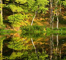 Wonderful Reflections by Monica M. Scanlan