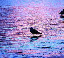 Purple & Blue Gulls by Martice