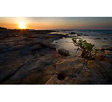 Sun Seeker Photographic Print