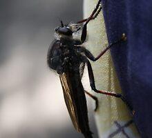 Big Bug by Fitzard-Fotos