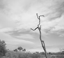 Stick by Nathan Pearce