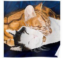 Peaceful sleep?-Jake and Jonah-Pet portrait Poster