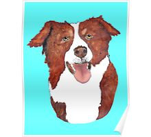 Red Border Collie Portrait Poster