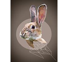 Poly Bunny Photographic Print