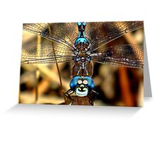 Smiley the Blue – eyed  Darner  Greeting Card