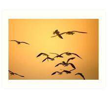 Sunset Gulls Art Print