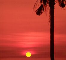 Palm and Sun by kinz4photo