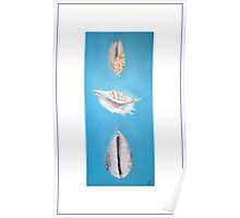 Three Shells Poster