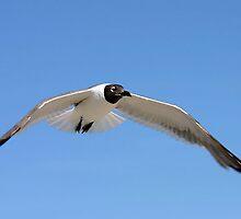 Wings of Flight by kinz4photo