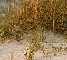 Dunes in Late day sunlight by kinz4photo