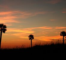 Four Palms by kinz4photo