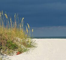 Seaoats by the sea by kinz4photo