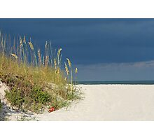 Seaoats by the sea Photographic Print