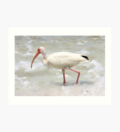 Ibis in the Surf Art Print