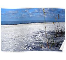 Seaoats  and Sea Poster