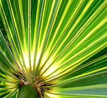 Backlit Palm leaf by kinz4photo