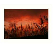 Seaoat Sunset Art Print