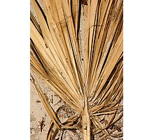 Palm Leaf in sand Photographic Print
