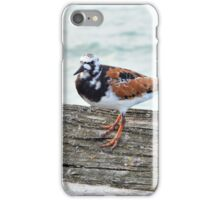 Ruddy Turnstone iPhone Case/Skin