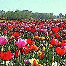 Tulipfield in Aquarel by ienemien