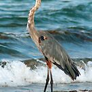 Heron at the sea by kinz4photo