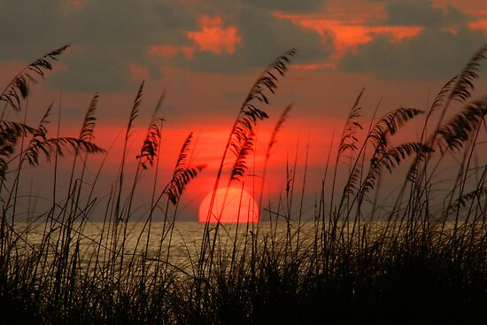 Seaoat Sunset by kinz4photo