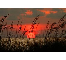 Seaoat Sunset Photographic Print