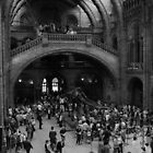 Natural History Museum by Anthony Gale
