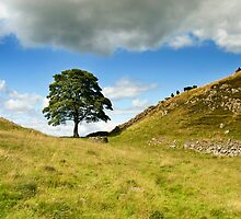 Sycamore Gap by cazjeff1958